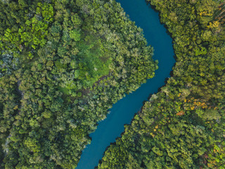 jungle forest aerial landscape, winding river view from above, nature and wilderness