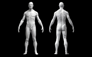 Human body anatomy of a man in two views isolated in black background - 3d render
