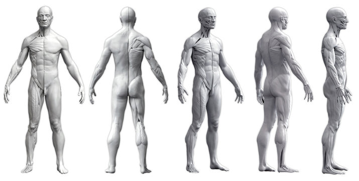 Human body anatomy of a man in five views isolated in white background - 3d render
