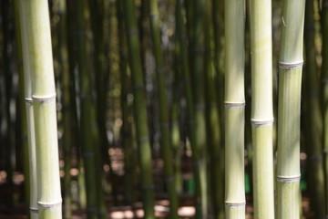 Bambus Wald Zeichen