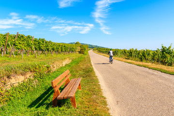 Cyclist riding on road along vineyards to Hunawihr village, Alsace Wine Route, France