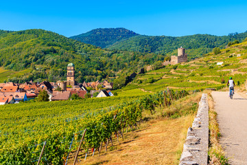 Green vineyards and view of Kayserberg medieval village on Alsatian Wine Route, France