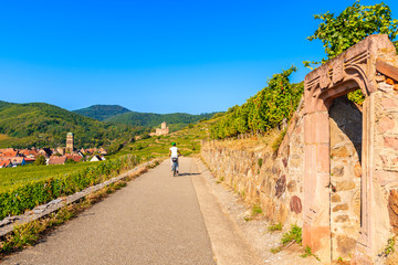 Young woman cycling on road along vineyards to Kaysersberg village, Alsace Wine Route, France