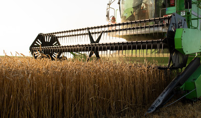 Harvester at work in summer sun