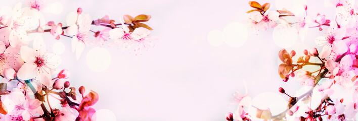 Fotorollo Kirschblüte Cherry blossom