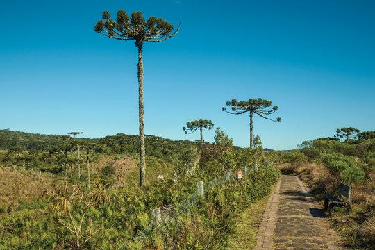 Pathway in the Aparados da Serra National Park