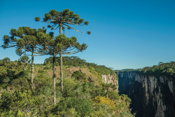 Itaimbezinho Canyon with rocky cliffs and forest