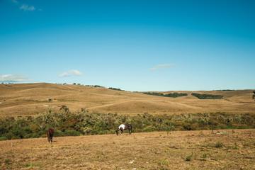 Horses grazing on landscape of rural lowlands