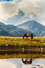 Tuinposter Paarden Wild horse roaming free on an alpine pasture in the summer