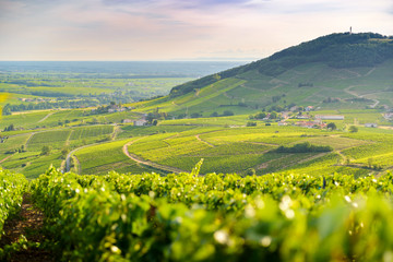 Landcape with morning lights over vineyards of Brouilly, Beaujolais, Franvce