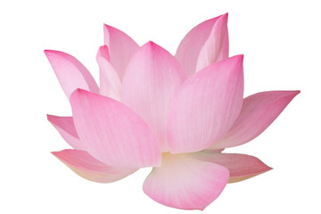 Papiers peints Fleur de lotus The pink lotus flower in nature background, flower and leaf texture
