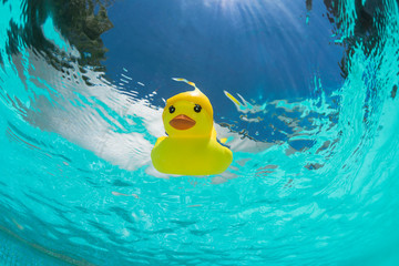 Floating rubber duck in the swimmingpool