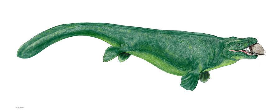 グロビデンス・アラバマエンシス 白亜紀後期に全盛を謳歌した海棲爬虫類は大型で危険なものが多いが、グロビデンスは小型でちょっと変わり者。重い頭と球状の歯はハマグリやアンモナイトの硬い殻をやすやすとかみ砕くために特化している。脊椎骨は脆弱で現代の魚類の中ではオオカミウオを連想させる。体長は5~6メートル。
