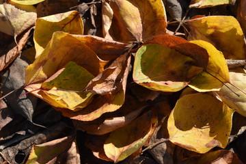Brillante y colorido fondo de hojas secas iluminado por la luz del sol.