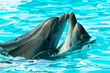 Autocollant pour porte Dauphin dolphins swim and jump in the water