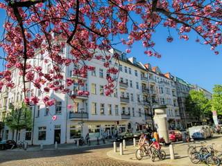 Fotorollo Berlin kirschblüte in berlin prenzlauer berg, deutschland