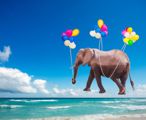 Photo sur Toile Elephant African elephant fly on the color air balloons