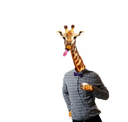 Giraffe in shirt of a man with stuck out tongue
