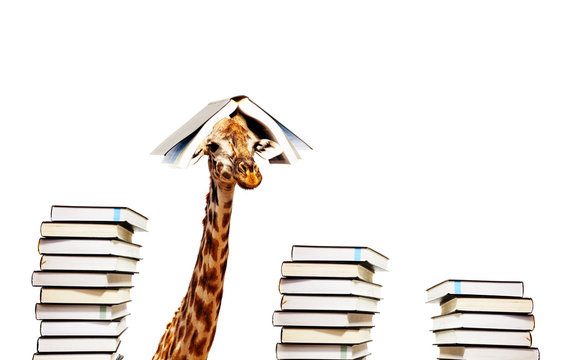 Funny giraffe with piles and book on head look