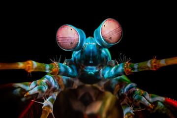 Augen eines Fangschreckenkrebs im Meer bei Bali, Indonesien