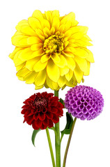 Cadres-photo bureau Dahlia dahlias on a white background