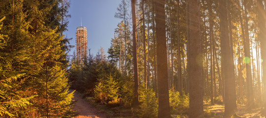 Wooden lookout tower on the top of Hradiste Hill, south Bohemia, Czech republic, in the forest with the shining rays of the sun, in the background the blue sky