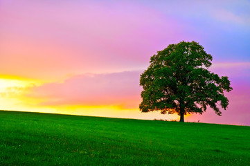 Peaceful landscape tree sunset sky