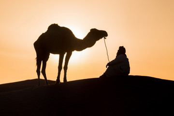 Photo sur Aluminium Chameau Bedouin and camel on way through sandy desert Beautiful sunset with caravan on Sahara, Morocco Desert with camel and nomads Silhouette nomad man with dramatic sky Picturesque background nature concept