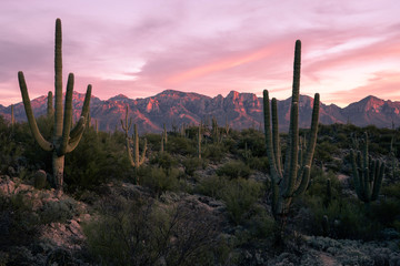 Zelfklevend Fotobehang Arizona Desert Sunset in Tucson Arizona
