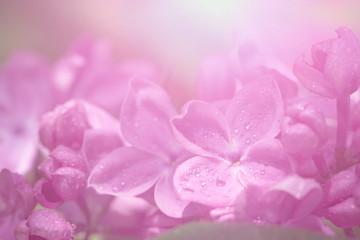 Foto op Aluminium Lilac Lilac flowers background.