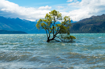 That Wanaka tree, Wanaka, New Zealand, Cloudy and big waves
