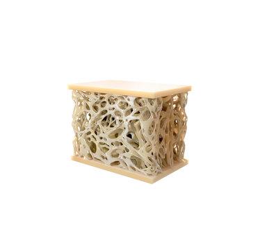 Digital illustration bone structure
