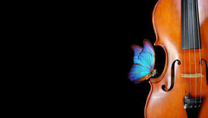violin isolated on black closeup. beautiful blue butterfly morpho on violin. music concept. copy spaces Wall mural