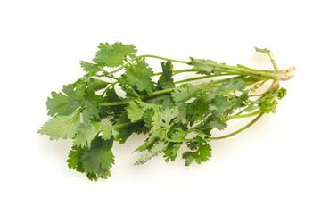 Fresh ripe  Green cilantro leaves