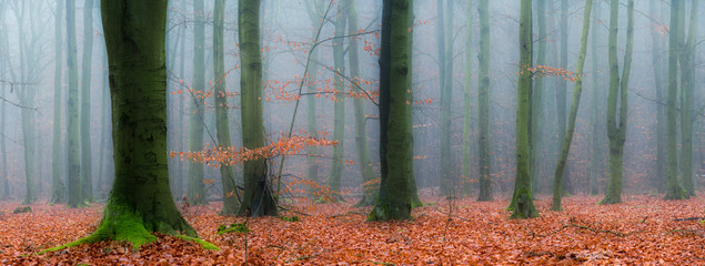 Foto op Canvas Donkergrijs Panorama of forest covered with fog