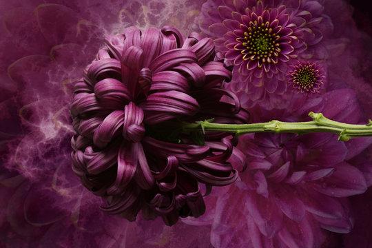 Flower arrangement, violet and pink