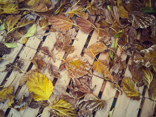 Hojas secas de otoño sobre suelo de madera. Vista superior. Vista de cerca