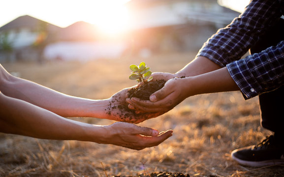 Young seedlings are ready to grow in fertile soil, Agriculture gave the young men trees to prepare for planting and reduce global warming, Save world save life and Plant a tree concept..