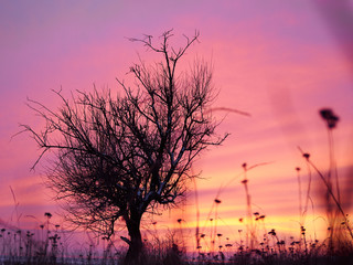 Foto auf Acrylglas Rosa Lovey Alone tree in winter coast field in sunset pink, purple sky with rocks and snow