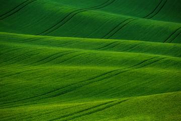 Foto auf Acrylglas Grun Beautiful green meadows, fields and hills landscape in Moravian Tuscany, South Moravia, Kyjov, Czech Republic.