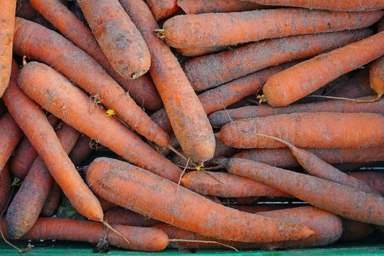 Fresh organic sand carrots with soil for sale at a farmers market