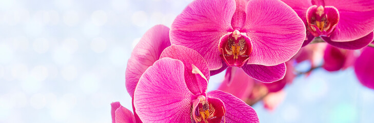 Photo sur Toile Orchidée Beautiful pink orchid