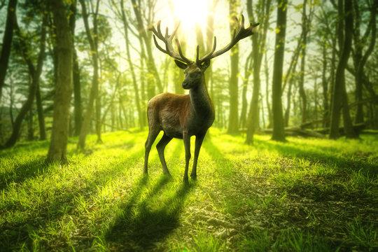 Großer Hirsch steht in einem hellem grünen Wald