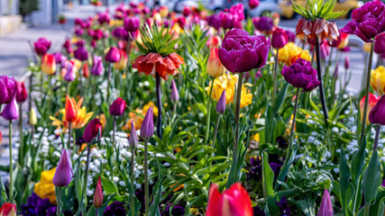 Fotobehang Tulp Beautiful bouquet of tulips, colorful tulips, tulips in spring, colourful tulip