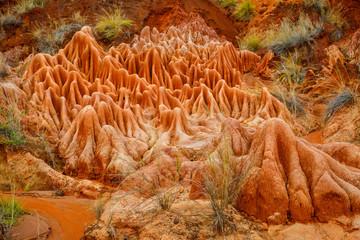 Foto auf AluDibond Rot kubanischen Plant life within sandstone pinnacles at the Red Tsingy towards Antsiranana, Madagascar