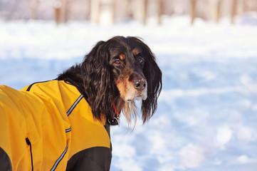 Dog at the winter walk looking back