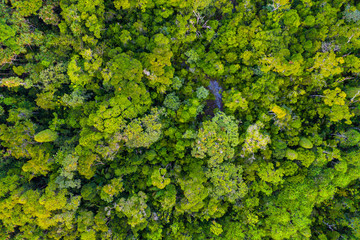 Aerial view for the primary rainforest in Masoala National Park, Madagascar