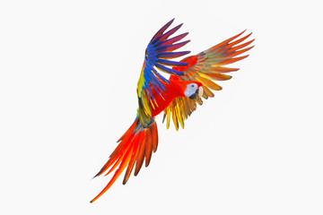 Fond de hotte en verre imprimé Perroquets Scarlet macaw parrot isolated on white background.