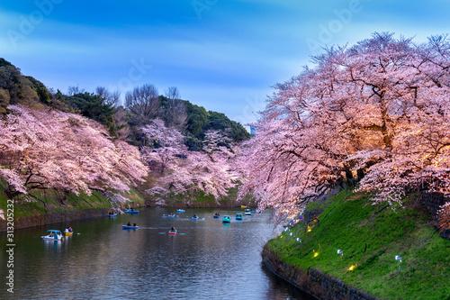Wall mural Cherry blossoms at Chidorigafuchi park in Tokyo, Japan.