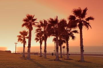 Foto auf AluDibond Braun Palm trees on the promenade in the city of Netanya at sunset, Israel